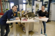 Trafalgar Grade 8 Leadership Class donates scratch posts to SPCA