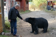 Allen Piche and one of his bear friends, Fierceheart; Photo, Mona Mattei