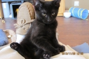 Black kittens are as cute, fuzzy and in need of homes as any others.