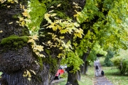 Preserving Our Green Canopy: A New Plan for Managing Nelson's Trees
