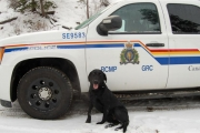 RCMP dog Jet was key in the arrest of two Vernon women on drug charges near Princeton. — photo courtesy RCMP