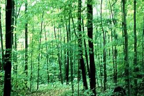 Public domain woodlot image.
