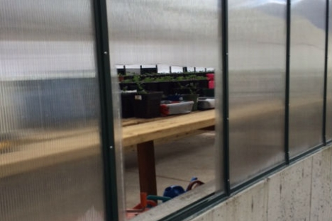 Thieves cut a hole in the locked greenhouse wall to enter the facility. — Submitted photoThieves cut a hole in the locked greenhouse wall to enter the facility. — Submitted photo